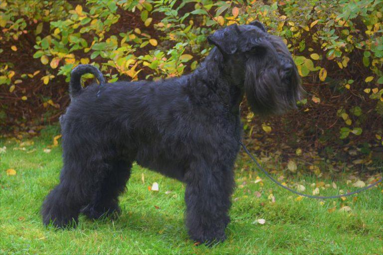 Greta profilbild
